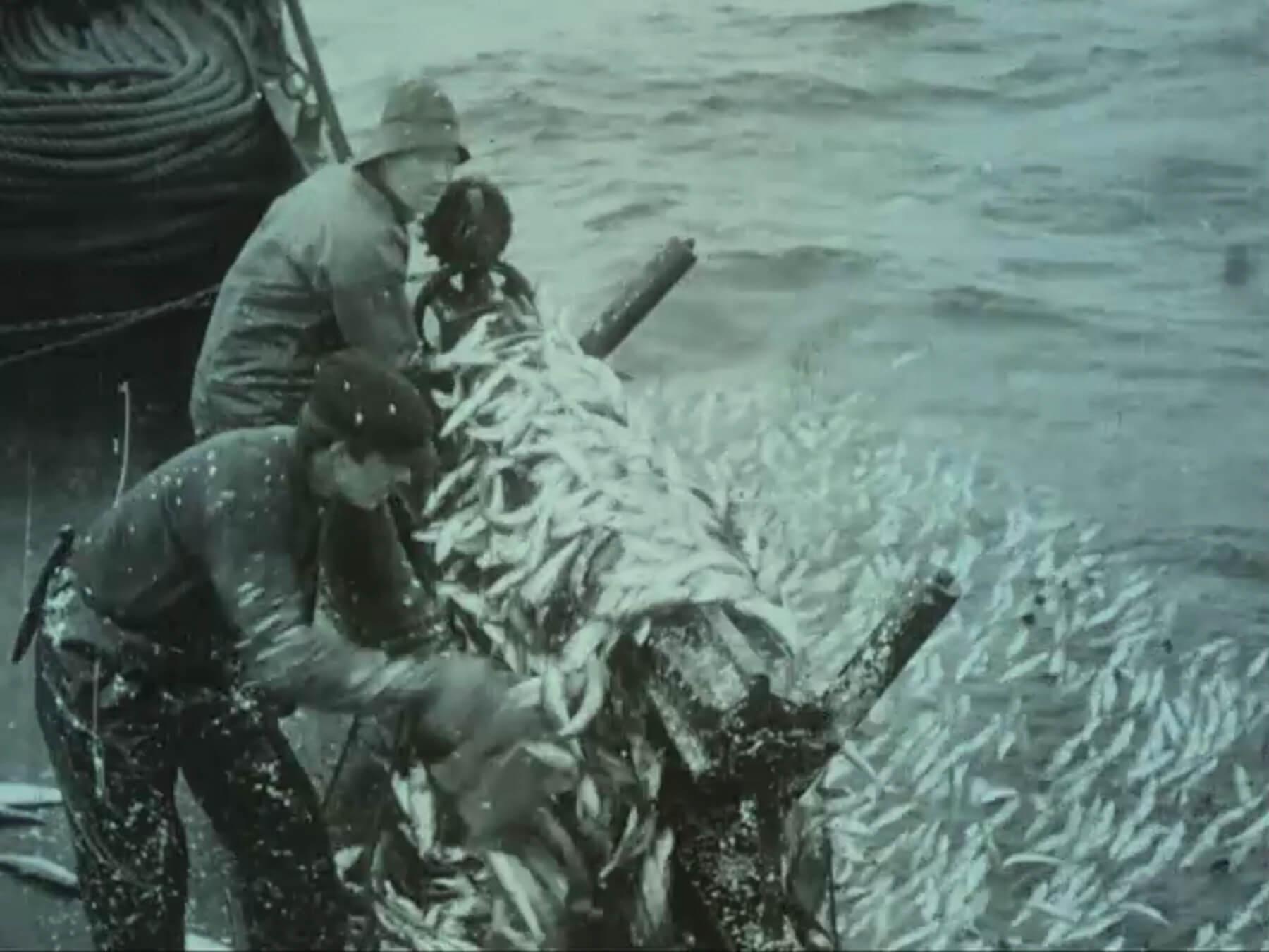 fishing atlantic herring outside aalesund 1914 doclisboa 3